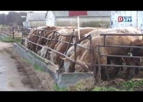 Szarvasmarha és sertésvágó üzem átadása Devecserben