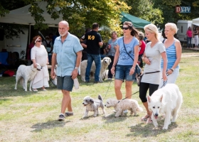 Juhász  és pásztorkutya CAC kutyakiállítás 2017