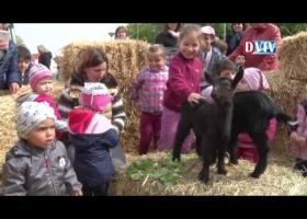 Tojásfa díszítés és állatsimogató Devecserben
