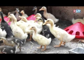 Kacsákkal bővült a devecseri Start munkaprogram állatállománya